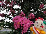Amifumu_b629
