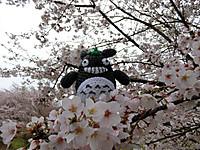Amifumua892_2