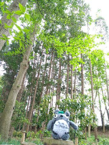 Amifumu_b041