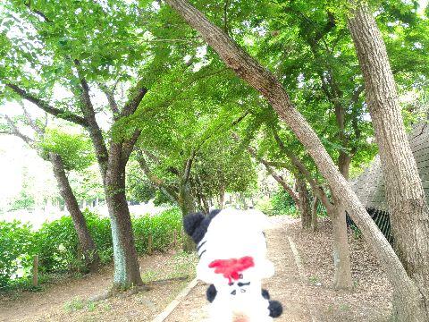 Amifumu_b119