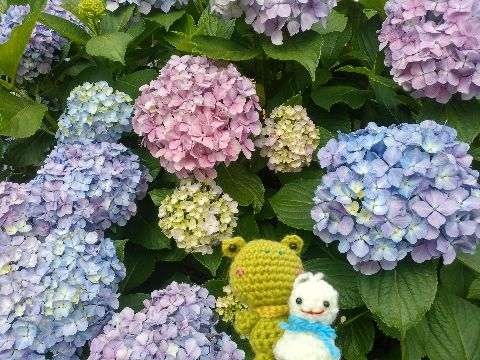 Amifumu_b303