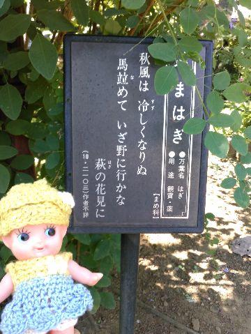 Amifumu_b817