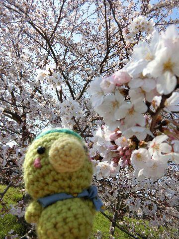 Amifumu_c709