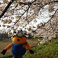 Amifumu_c718