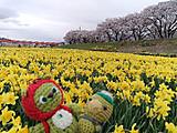 Amifumua967_2