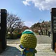 Amifumua821