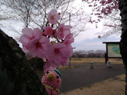 Amifumua887