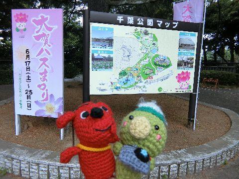 Amifumu_b340