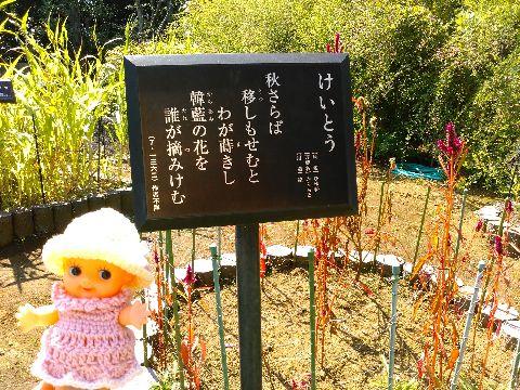 Amifumu_b816