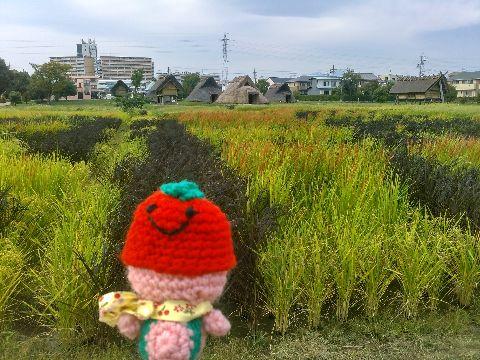 Amifumu_b868