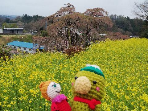 Amifumu_c812