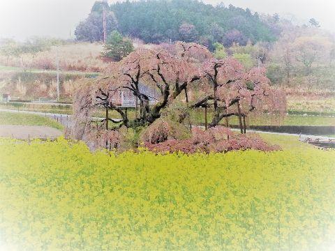 Amifumu_c813