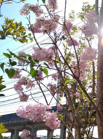 Amifumu_c858