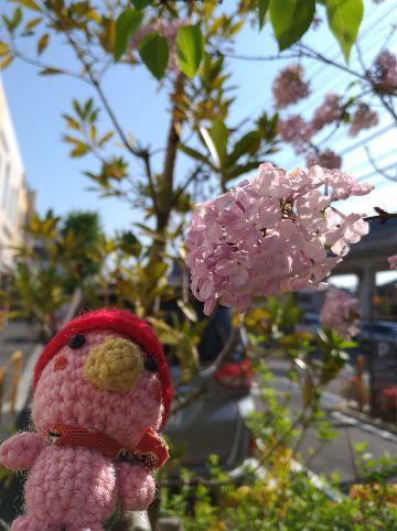 Amifumu_c859