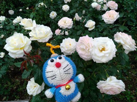 Amifumu_d617